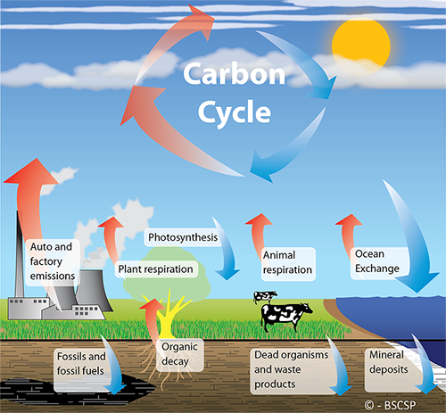 The carbon cycle is the process by which carbon is exchanged between the atmosphere and life on earth.
