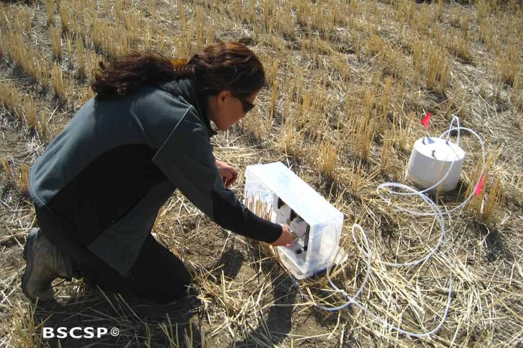 "<br />Montana State University researchers working with BSCSP evaluated the capacity for croplands and rangelands to sequester carbon in their soils, a process known as <a href=""/terrestrial_CCS"" target=""blank"">terrestrial carbon capture and storage</a>."
